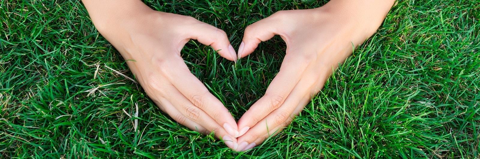Hands in shape of a heart on green grass